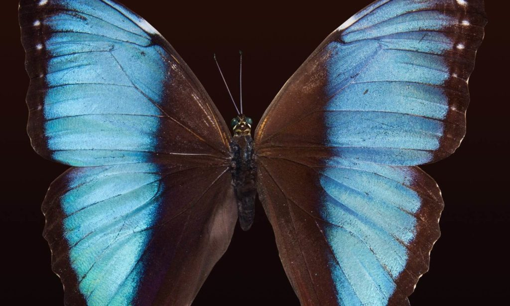 the butterfly effect cover