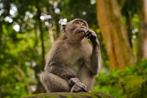 A monkey thinking about something | Debt Financing vs Equity Financing