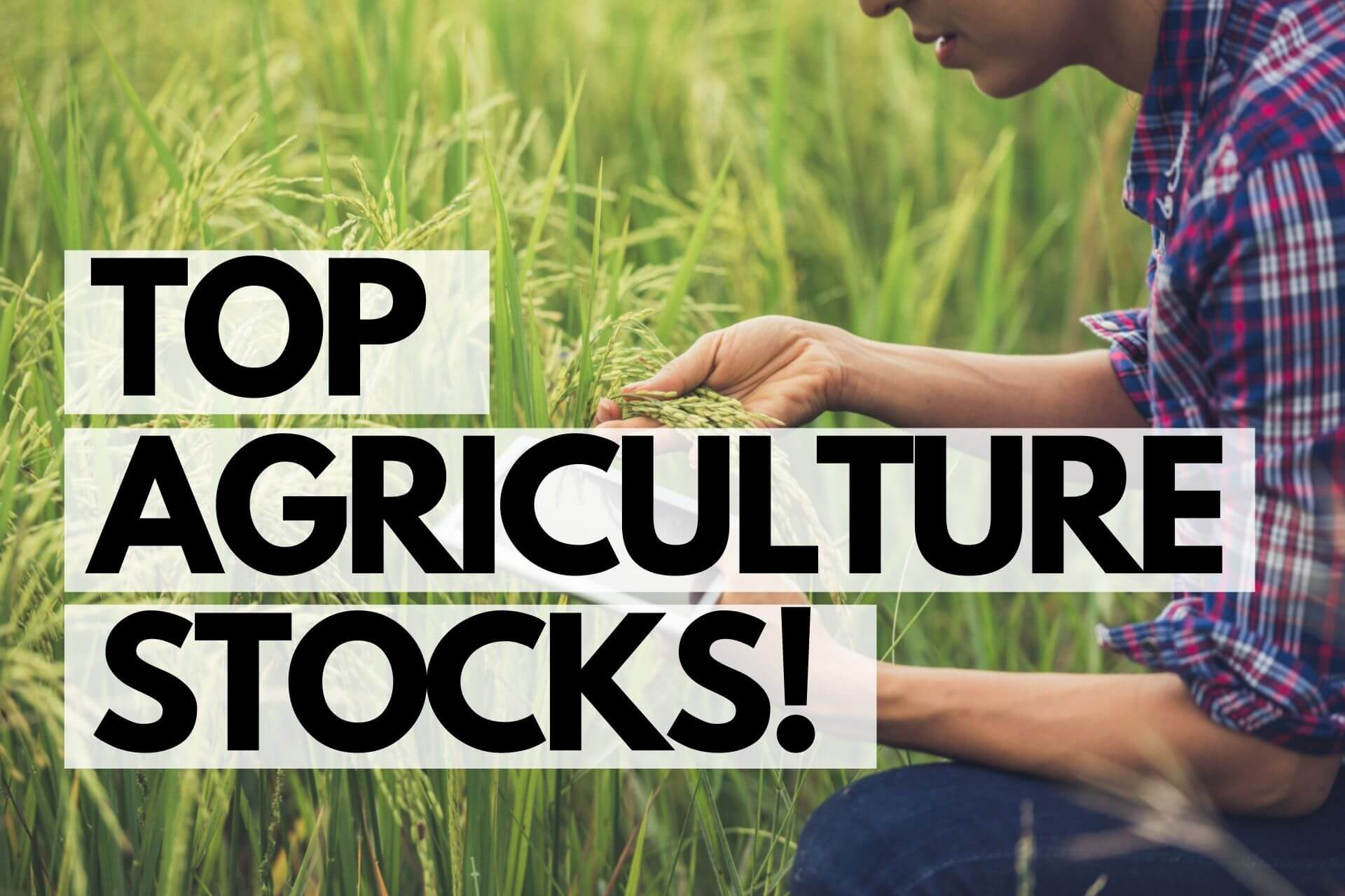 Top 7 Agriculture Companies in India 2021 – Best Agriculture Stock to Buy!